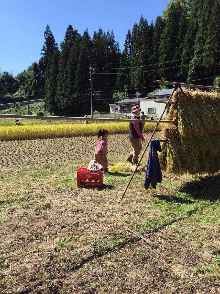 【食・農・山村体験とまちむら交流会 in 鬼無里】 ~ 稲刈り・はぜかけ体験と収穫に感謝して味わうごはん ~