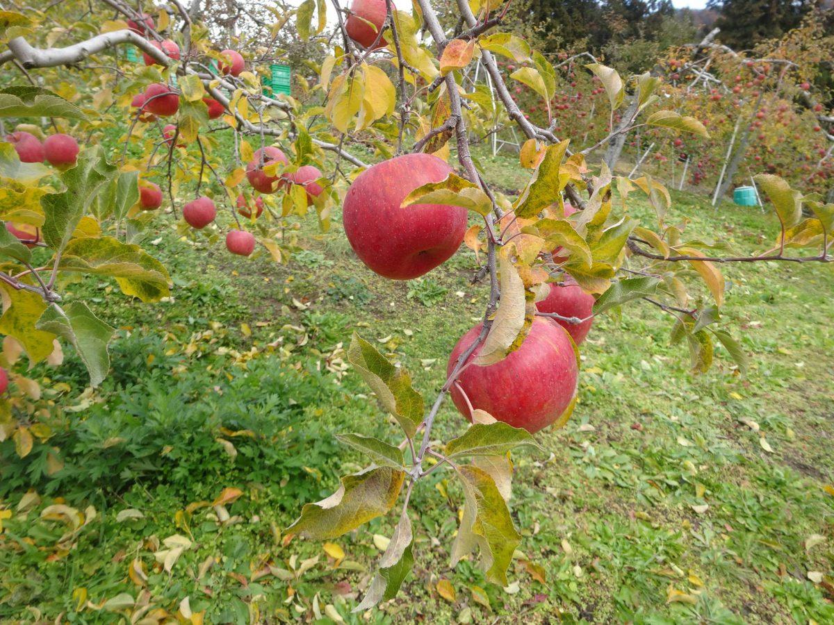 【中止となりました】食・農・山村体験とまちむら交流会 in IMOI(芋井)~秋の収穫祭~