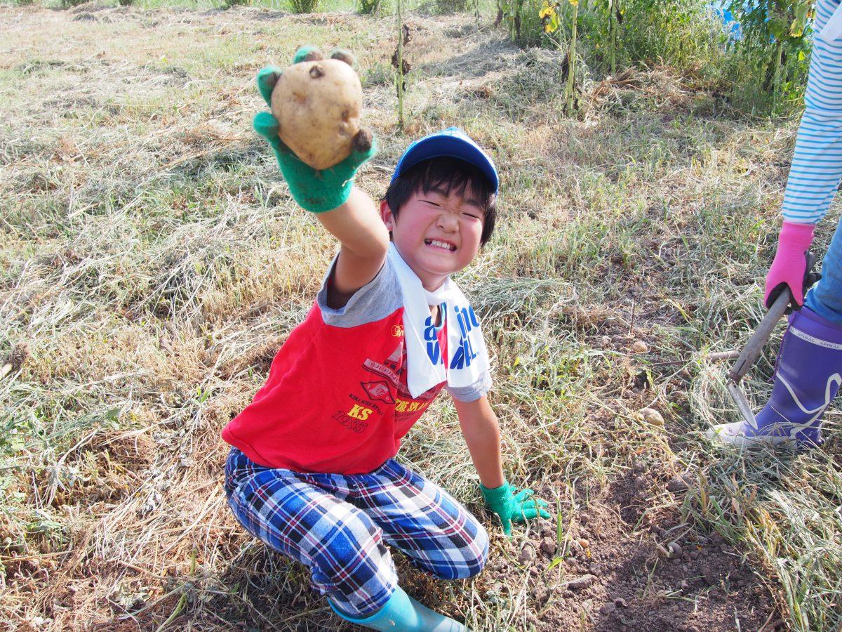 8月5日、キッズふぁーむでじゃがいもを収穫しよう!松代で開催!